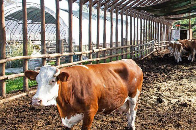 Cooperativa Tesori Bio stalla e allevamento biologico